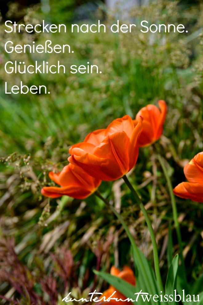 Tulpen VI_Spruch