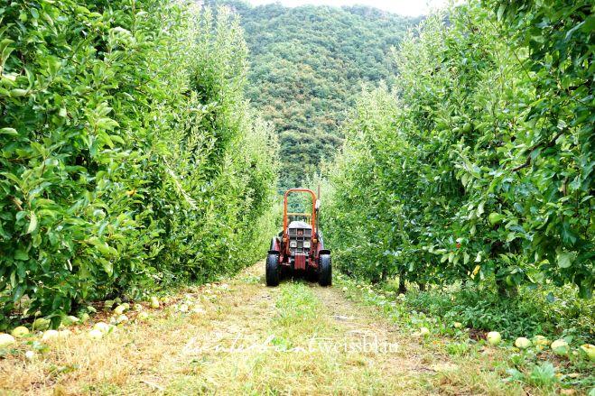 traktor-apfelplantage