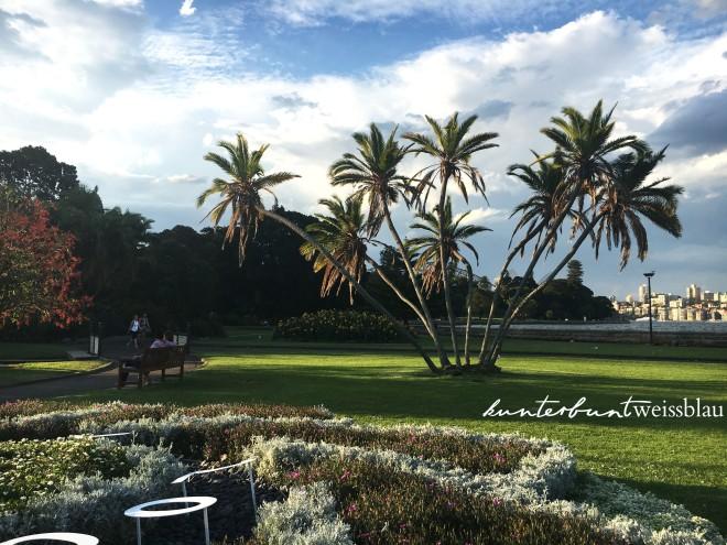 botanicgarden_palmtrees