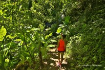 Dorrigo Nationalpark-5