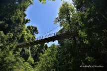 Dorrigo Nationalpark-6