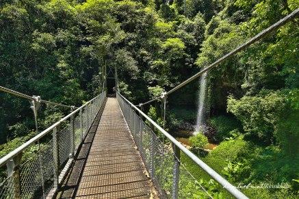 Dorrigo Nationalpark-8